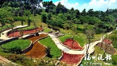鼓楼四大茉莉园70万株茉莉盛开 下半年动建多个公园