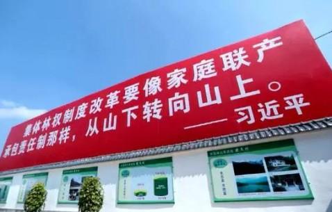 砥砺奋进的五年·为了总书记的嘱托丨林业改革:捷文村的绿色梦