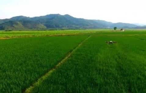 扬帆新时代丨福建:牢记总书记嘱托 加快特色现代农业建设