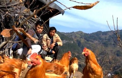 扬帆新时代丨福建:精准脱贫 更要乡村振兴