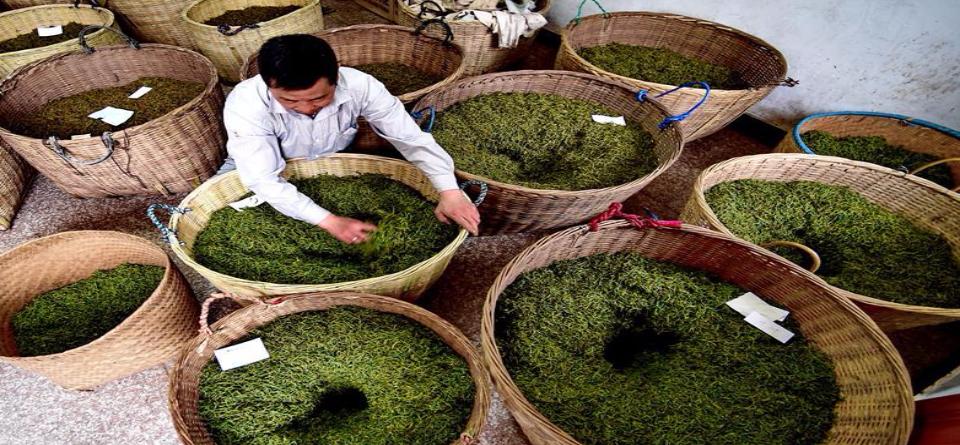 一带一路好味道--武夷红茶