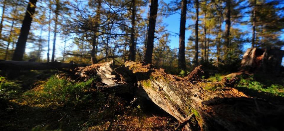 森林面积全国第一