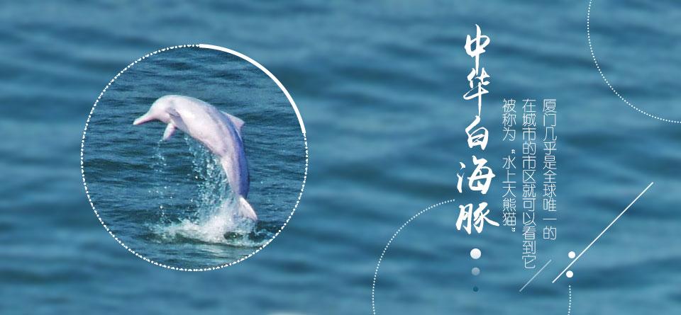 中华白海豚——TA是谁