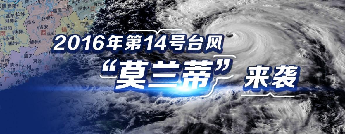 """防抗台风""""莫兰蒂"""""""