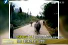 """我不见外 老潘中国行丨陕西:一条特殊的""""路"""""""