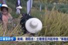 南靖:割稻去!土楼景区兴起丰收