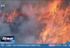 澳大利亚主要林火区灾情有所缓解