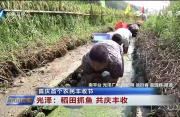 福建:喜庆首个农民丰收节