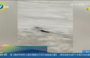 """""""悬疑案""""告破!工作人员证实:三峡水怪实为黑色遮阳网"""