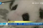 """旅德大熊猫""""梦梦""""的双胞胎幼崽睁眼看世界"""