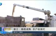 晋江:晚稻成熟 农户收割忙