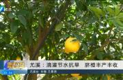尤溪:滴灌节水抗旱 脐橙丰产丰收