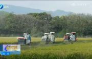 长汀:机械收水稻 提效又增收