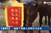 福建下海救人的两匹马去世