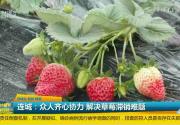 连城:众人齐心协力 解决草莓滞销难题