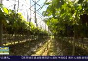 """福鼎:多种模式""""转活""""土地  促农增收"""