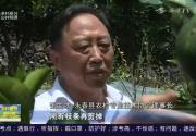 张生才:福建最美农技员 永春芦柑产业复兴带头人
