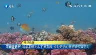 科学家研发水下扬声器 或助受损的珊瑚礁恢复活力