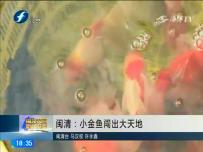 閩清:小金魚闖出大天地