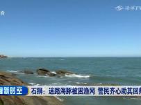 石狮:迷路海豚被困渔网 警民齐心助其回归大海