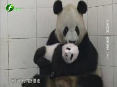 《纪录时间》 熊猫宝宝(下)