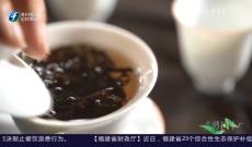 《多彩闽茶》9月6日