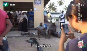 主播旅行社 玩转桑给巴尔岛的海边鱼市
